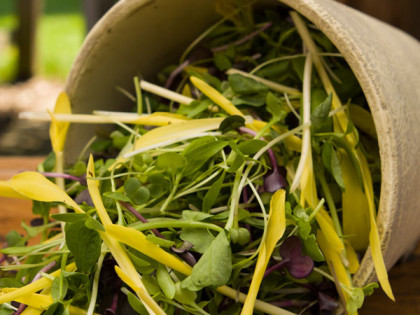 6 Tips For Handling Microgreens